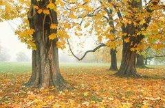 秋风肃起  吹响过敏性鼻炎集